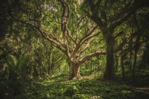 High availability scalable tree