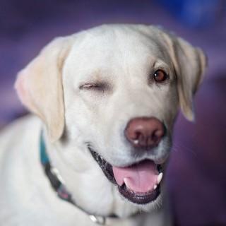 Dog 2944964 640